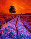 Lavender fields. Original oil painting of lavender fields on canvas.Rich golden Sunset landscape.Modern Impressionism Stock Photos