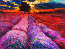 Lavender fields. Original oil painting of lavender fields on canvas.Sunset landscape.Modern Impressionism Royalty Free Stock Image