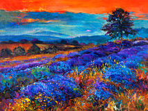 Lavender fields. Original oil painting of lavender fields on canvas.Sunset landscape.Modern Impressionism Stock Image