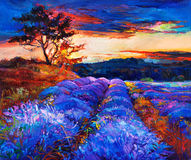 Lavender fields. Original oil painting of lavender fields on canvas.Sunset landscape.Modern Impressionism Stock Photos
