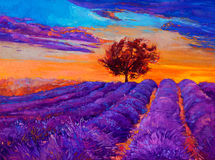 Lavender fields. Original oil painting of lavender fields on canvas.Sunset landscape.Modern Impressionism Stock Photography