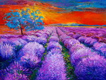 Lavender fields. Original oil painting of lavender fields on canvas.Sunset landscape.Modern Impressionism Royalty Free Stock Photo