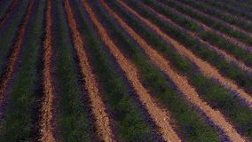 Lavender fields seen from drone Royalty Free Stock Image