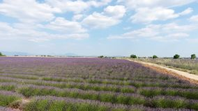 Lavender fields seen from drone Royalty Free Stock Photos