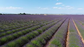 Lavender fields seen from drone Stock Photo