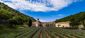 Lavender fields, Provence, France Royalty Free Stock Photo