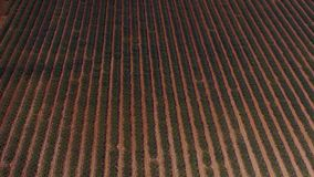 Lavender fields seen from drone Stock Photography
