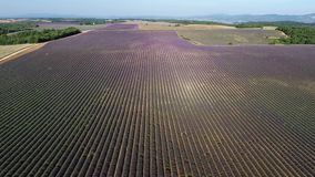 Lavender fields seen from drone. Lavender Fields of Provence, France, aerial view, Valensole Plateau