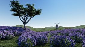 Lavender fields with a solitary tree 3d rendering. Lavender fields with a solitary tree Royalty Free Stock Image