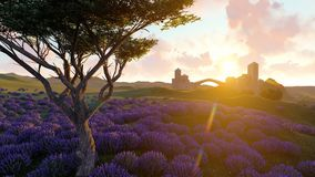 Lavender fields with a solitary tree 3d rendering. Lavender fields with a solitary tree Royalty Free Stock Photography