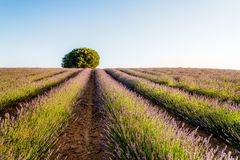 Lavender fields.  Summer sunset landscape in Brihuega. Lavender fields. Summer sunset landscape in Brihuega, Guadalajara Royalty Free Stock Images