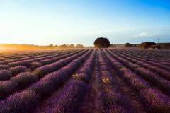 Lavender fields.  Summer sunset landscape in Brihuega. Lavender fields. Summer sunset landscape in Brihuega, Guadalajara Royalty Free Stock Photos