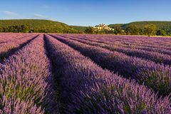 Lavender fields at sunrise with the village of Banon in summer. Alpes-de-Hautes-Provence, France. Lavender fields at sunrise with the village of Banon in summer stock photos