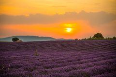 Lavender fields at sunset near the village of Valensole, Provence, France. stock photos