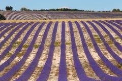 Lavender fields in valensole provence france landscape Stock Photos