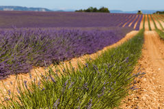 Lavender fields in valensole provence france landscape Stock Images