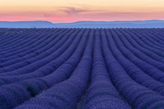 Lavender fields in valensole provence france landscape. Lavender fields provence france landscape Stock Images