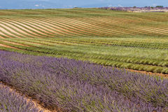 Lavender fields in valensole provence france landscape. Lavender fields provence france landscape Stock Photos
