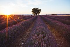 Lavender Fields in Valensole, Provence, France. At Sunset Royalty Free Stock Images