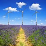 Lavender fields Stock Photos