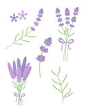 Lavender flat vector set. On white background Stock Photo