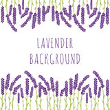 Lavender floral background Royalty Free Stock Images