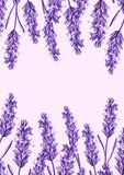 Lavender flower background Royalty Free Stock Photography
