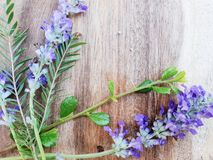 Purple lavender flower bloom on wooden background royalty free stock photo