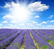 Lavender flower Royalty Free Stock Photos