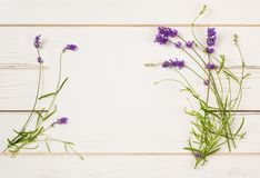 Lavender Flower Blossoms on Stems with leaves as Borders of White Paper Card on Distressed White Shiplap Board Background with roo