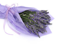 Lavender flower bouquet. Wrapped with purple tissue paper stock photography