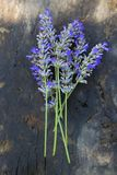 Lavender flower bouquet stock photography