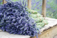 Lavender flower bouquets on a wooden old bench. Pile of lavender flower bouquets on a wooden old bench in a summer garden Royalty Free Stock Images