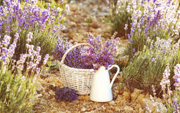 Lavender flower composition. Stock Photography