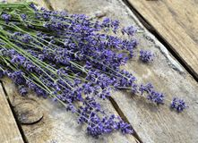 Lavender, Flower, English Lavender, Purple stock photo
