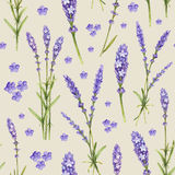 Lavender flower illustrations Royalty Free Stock Image