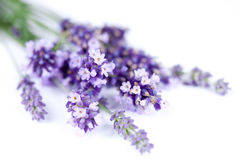 Lavender flower isolated on white stock photography