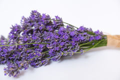 Lavender flower isolated on white Royalty Free Stock Image