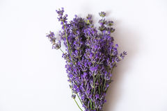 Lavender flower isolated on white Royalty Free Stock Photos