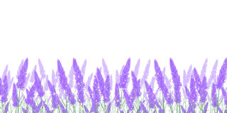 Lavender flower landscape background Stock Image