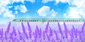 Lavender flower landscape background Stock Images