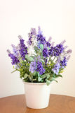 Lavender in flower pot Royalty Free Stock Image