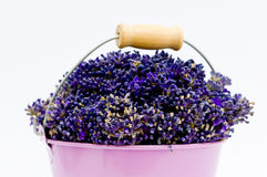 Lavender flower in purple bucket. On isolated white background Stock Image