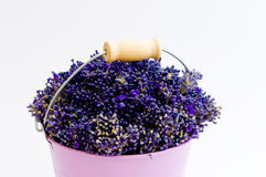 Lavender flower in purple bucket. On isolated white background Stock Photography