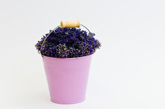 Lavender flower in purple bucket. On isolated white background Royalty Free Stock Image