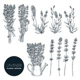 Lavender flower set, vector sketch illustration. Hand drawn bouquet, floral design elements isolated on white background stock illustration
