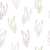 Lavender flower sketch graphic art seamless pattern illustration Royalty Free Stock Image