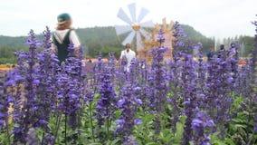 Lavender flower stock video footage