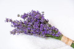 Lavender flower  on white Stock Photo