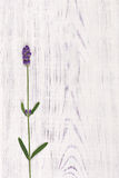 Lavender flower on white wood table background stock image